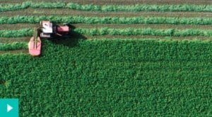 Tractor mowing green agriculture field