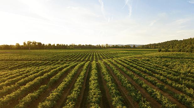 Agriculture Report Q4 2020
