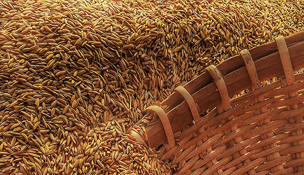 Grains and Wheat