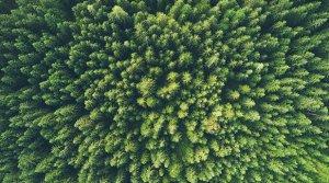 EFT Report - March, environment