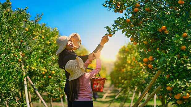 Costa Group Holdings (CGC) – Citrus investment grows