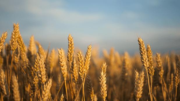 ASX Grains Focus – June 2021