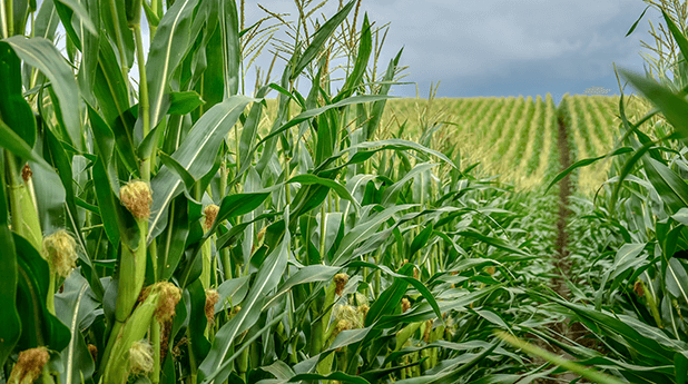 Highlights ahead of the crucial Acreage and Grain Stocks Report on 30 June