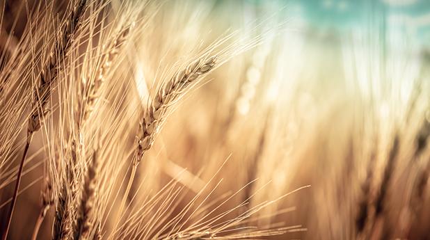 ASX Grains Focus – July 2021