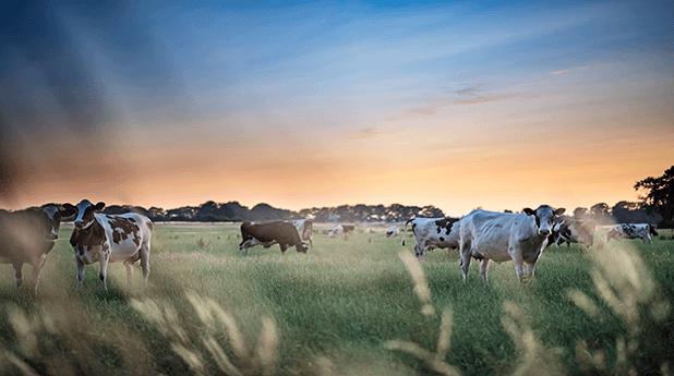 Bega Cheese Ltd (BGA): Better buy Bega…Back